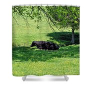 Noon Siesta Shower Curtain by Jan Amiss Photography