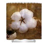 North Carolina Cotton Boll Shower Curtain by Benanne Stiens