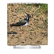 Northern Lapwing Shower Curtain by Louise Heusinkveld
