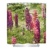 Nova Scotia Lupine Flowers Shower Curtain by Jeff Kolker