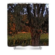 Oak Tree And Vineyards In Knight's Valley Shower Curtain by Charlene Mitchell