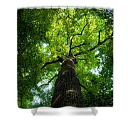 Old Growth Shower Curtain by David Lee Thompson