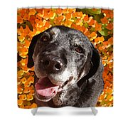 Old Labrador Shower Curtain by Amy Vangsgard