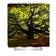 Old Old Angel Oak In Charleston Shower Curtain by Susanne Van Hulst