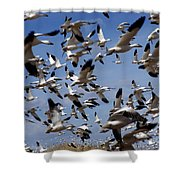 On A Mission Bosque Del Apache Shower Curtain by Kurt Van Wagner