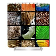 One Day At The Zoo Shower Curtain by Michelle Calkins