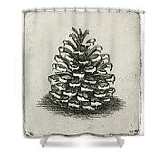 One Pinecone Shower Curtain by Charles Harden