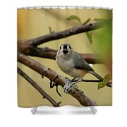 Open Wide Shower Curtain by Karol Livote