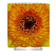 Orange And Black Gerber Center Shower Curtain by Amy Vangsgard