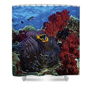 Orange-finned Clownfish And Soft Corals Shower Curtain by Terry Moore