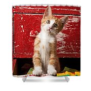Orange Tabby Kitten In Red Drawer  Shower Curtain by Garry Gay