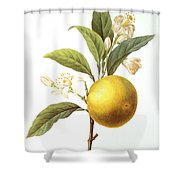 Orange Tree Shower Curtain by Granger