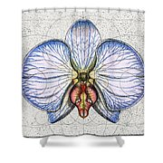 Orchid Shower Curtain by Charles Harden