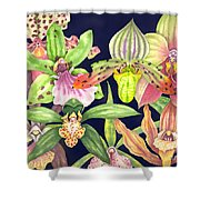 Orchids  Shower Curtain by Lucy Arnold