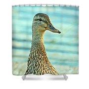 Oscar le canard Shower Curtain by Aimelle