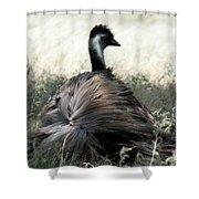 Ostracized Ostrich Shower Curtain by Douglas Barnard