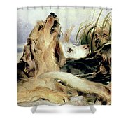 Otter Hounds Shower Curtain by Sir Edwin Landseer