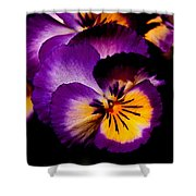 Pansies Shower Curtain by Rona Black