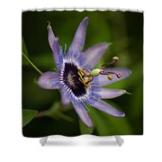 Passiflora Shower Curtain by Mike Reid