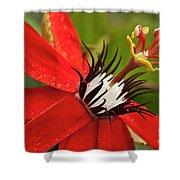 Passionate Flower Shower Curtain by Heiko Koehrer-Wagner