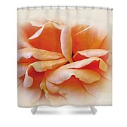 Peach Delight Shower Curtain by Kaye Menner