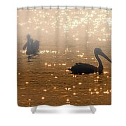 Pelican Sunrise Shower Curtain by Mike  Dawson