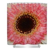 Pink And Brown Gerber Center Shower Curtain by Amy Vangsgard