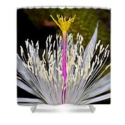 Pink And Yellow Pistil Shower Curtain by Kelley King