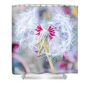 Pink Dandelion Shower Curtain by Parker Cunningham