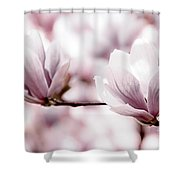 Pink Magnolia Shower Curtain by Elena Elisseeva