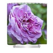 Pink Rose Flower Shower Curtain by Frank Tschakert