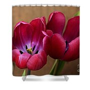 Pink Tulip Pair Shower Curtain by Deborah Benoit