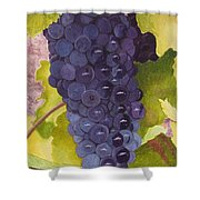 Pinot Noir Ready For Harvest Shower Curtain by Mike Robles