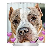 Pit Bull Dog - Pure Love Shower Curtain by Sharon Cummings