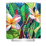Plumeria Garden Shower Curtain by Marionette Taboniar