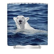 Polar Bear Swimming Baffin Island Canada Shower Curtain by Flip Nicklin