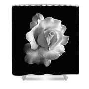 Porcelain Rose Flower Black And White Shower Curtain by Jennie Marie Schell