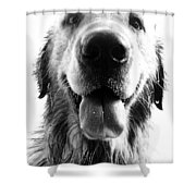 Portrait of a Happy Dog Shower Curtain by Osvaldo Hamer