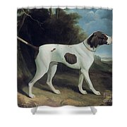 Portrait Of A Liver And White Pointer Shower Curtain by George Garrard