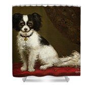 Portrait Of A Spaniel Shower Curtain by Anonymous