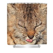 Portrait of a Young Bob Cat 02 Shower Curtain by Wingsdomain Art and Photography