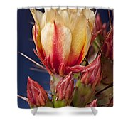 Prickly Pear Flower Shower Curtain by Kelley King