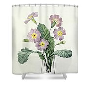 Primrose Shower Curtain by Pierre Joseph Redoute