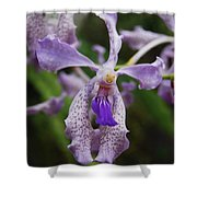Proud Girl Shower Curtain by Michael Peychich