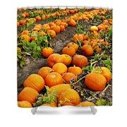 Pumpkin Patch Shower Curtain by Carol Groenen