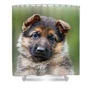 Puppy Portrait Shower Curtain by Sandy Keeton