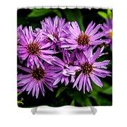 Purple Aster Blooms Shower Curtain by John Haldane