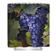 Purple Blush Shower Curtain by Sharon Foster