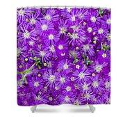 Purple Flowers Shower Curtain by Frank Tschakert