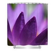 Purple Water Lily Abstract Shower Curtain by Sabrina L Ryan